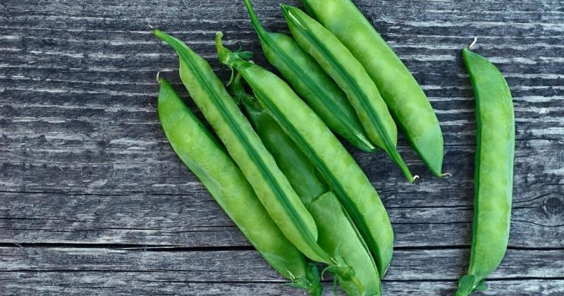 Ofte stilte spørsmål vegansk kosthold hepla