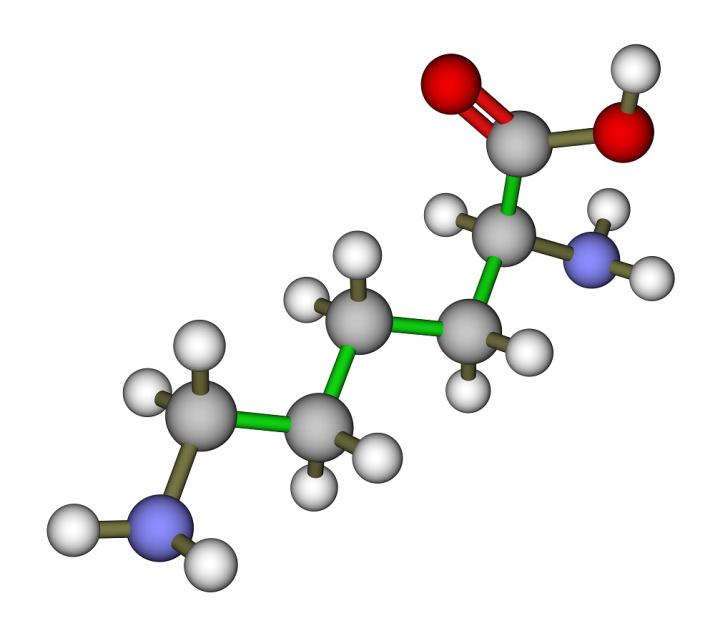 Proteiner og aminosyrer i vegansk, vegetarisk og plantebasert kosthold